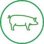 Pig smallholder vets