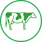 Dairy Cattle VetServices