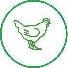 Poultry Smallholder
