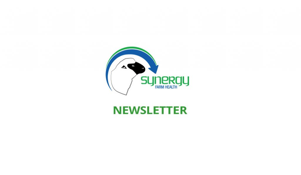 Sheep Newsletter